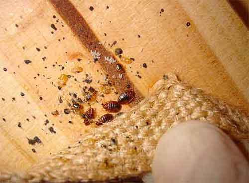 Разваляне на магия 02 насекоми у дома