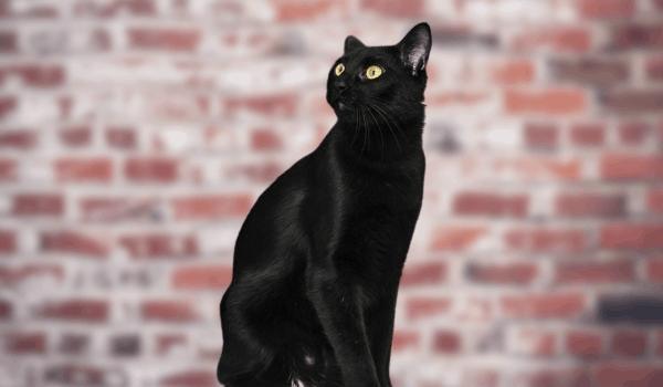 котката следи духовете с очи